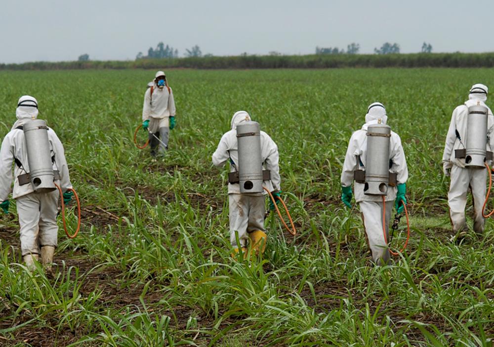 Le Glyphosate Cancérigène Présent Dans L Alimentation Prolongé Pour 5 Ans Par L Ue Mizane Info